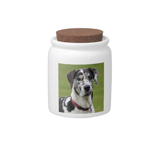 Great Dane dog harlequin beautiful photo, gift Candy Jar