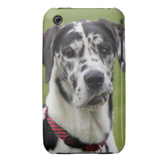 Great Dane dog harlequin beautiful photo, gift Case-Mate iPhone 3 Case