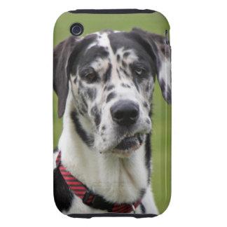 Great Dane dog harlequin beautiful photo, gift iPhone 3 Tough Case