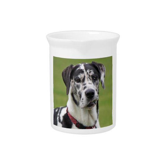 Great Dane dog harlequin beautiful photo, gift Drink Pitcher