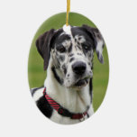 Great Dane dog harlequin beautiful photo, gift Double-Sided Oval Ceramic Christmas Ornament