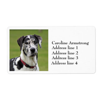 Great Dane dog harlequin custom address labels