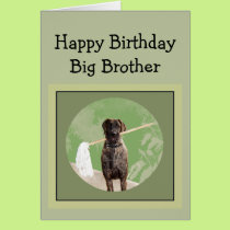 Great Dane Dog Humor Birthday Big Brother Fun Card