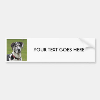 Great Dane dog photo custom bumper sticker