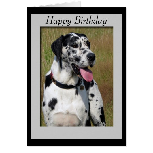 Great Dane dog photo happy birthday card