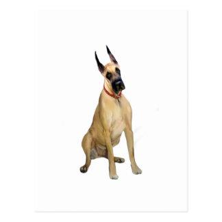 Great Dane - Fawn Sit 1 Postcard