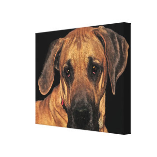 Great Dane Gentle Giant Wrapped Canvas Print