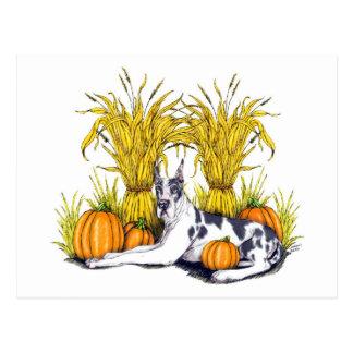 Great Dane Harlequin Harvest Postcard