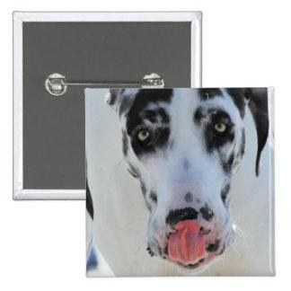 Great dane - Harlequin - mi lengua toca mi nariz Pin Cuadrado