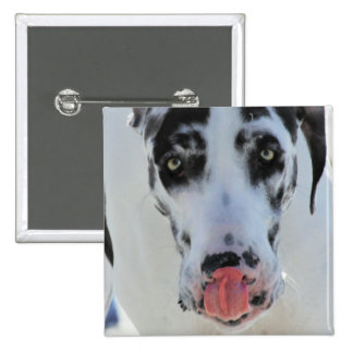 Great Dane - Harlequin - My Tongue Touches My Nose 2 Inch Square Button