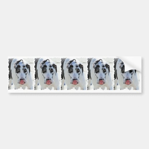 Great Dane - Harlequin - My Tongue Touches My Nose Bumper Sticker