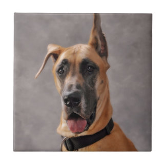 Great Dane Head Shot Ceramic Tile