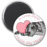 Great Dane Holds Heart Merle UC Fridge Magnets