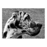 GREAT DANE LARGE BUSINESS CARDS (Pack OF 100)