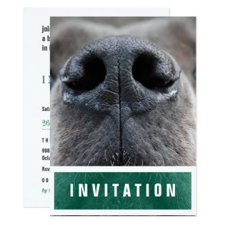 Great Dane Nose up Card