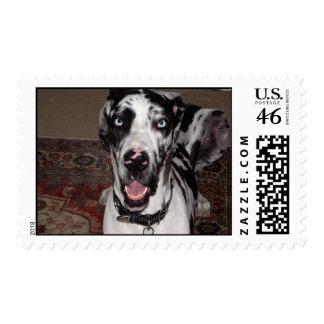 Great Dane Old blue eyes Postage Stamp
