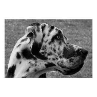 GREAT DANE IMPRESIONES