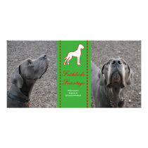 Great Dane Photo Cards