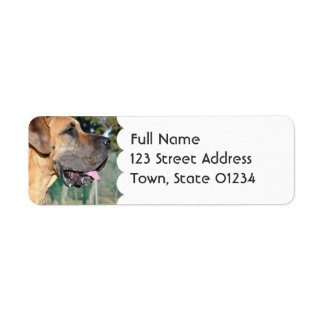 Great Dane Photo Mailing Labels