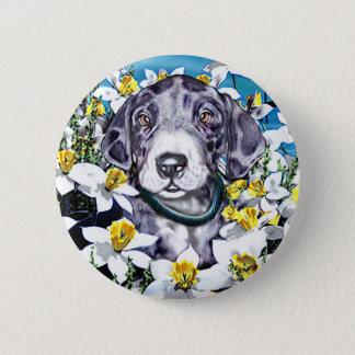 Great Dane Pup Daffodils MerleB Pinback Button
