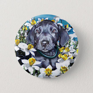Great Dane Pup in Daffodils Blue Pinback Button