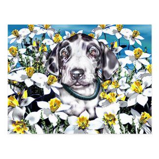 Great Dane Pup in Daffodils Harlequin Postcard