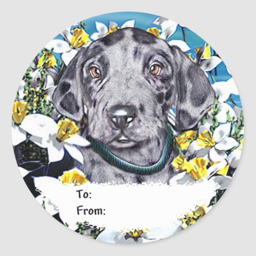 Great Dane Pup in Daffodils Merle Classic Round Sticker