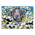 Great Dane Pup in Daffodils Merle Greeting Cards
