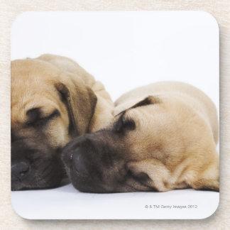 Great Dane puppies sleeping side by side in Drink Coaster