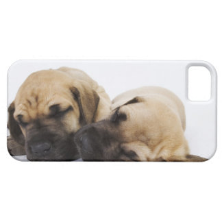 Great Dane puppies sleeping side by side in iPhone SE/5/5s Case
