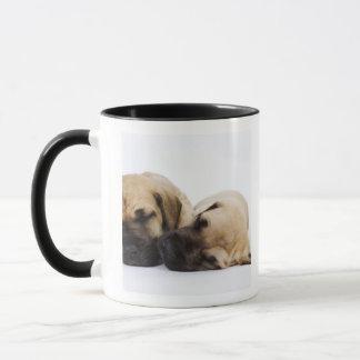 Great Dane puppies sleeping side by side in Mug