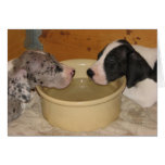 Great Dane Puppies 'Two Tired' Stationery Note Card
