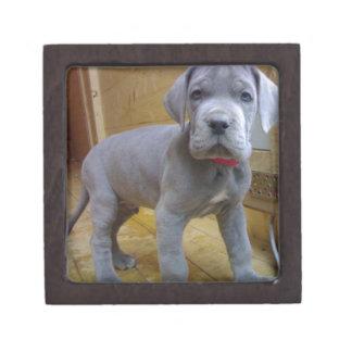 great dane puppy blue gift box