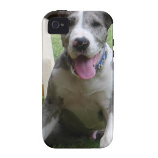 Great Dane Puppy iPhone 4/4S Cases