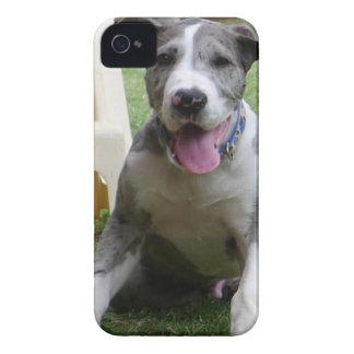 Great Dane Puppy iPhone 4 Case-Mate Cases