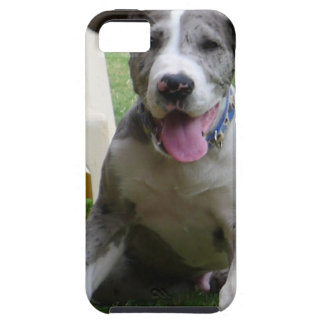 Great Dane Puppy iPhone 5 Cases