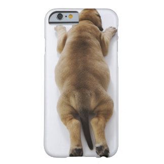 Great Dane puppy lying down in studio, overhead Barely There iPhone 6 Case
