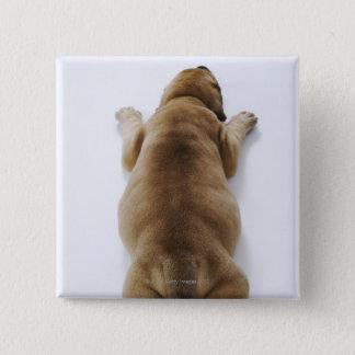 Great Dane puppy lying down in studio, overhead Button