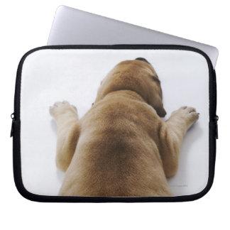 Great Dane puppy lying down in studio, overhead Computer Sleeve