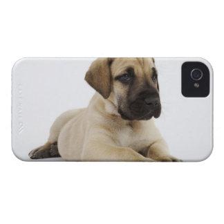 Great Dane puppy Lying in Studio iPhone 4 Case