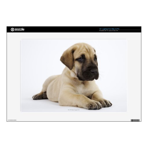 """Great Dane puppy Lying in Studio Decal For 15"""" Laptop"""