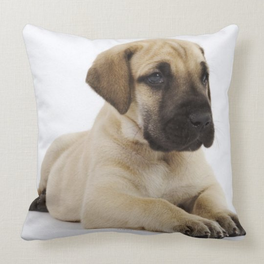 Great Dane puppy Lying in Studio Throw Pillow