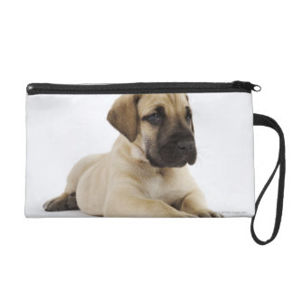 Great Dane puppy Lying in Studio Wristlet