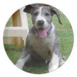 Great Dane Puppy Melamine Plate