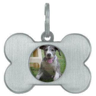 Great Dane Puppy Pet ID Tags