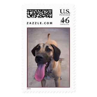 Great Dane Puppy Stamps
