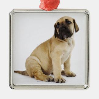 Great Dane Puppy Sitting in Studio Metal Ornament