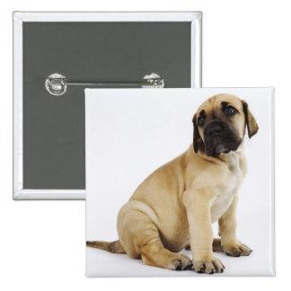 Great Dane Puppy Sitting in Studio Pinback Button