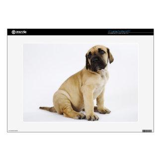 "Great Dane Puppy Sitting in Studio Skin For 15"" Laptop"