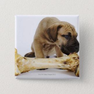 Great Dane puppy with bone in studio Button